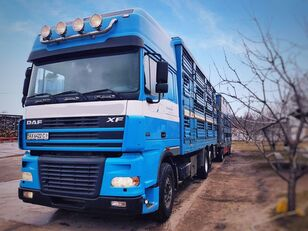 DAF XF 95 480 camión para transporte de ganado + remolque para transporte de ganado